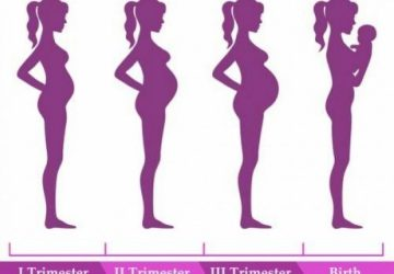 Trimesters of Pregnancy: Changes to Mother and Baby