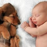 Babies and pets: Health benefits and How to Introduce a New Pet