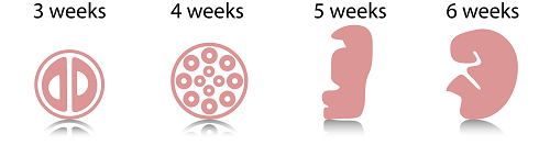 First Weeks
