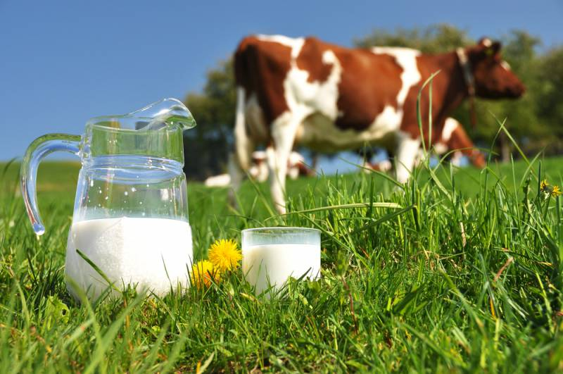 Foods_to_avoid_for_baby_cow_milk_babyinfo
