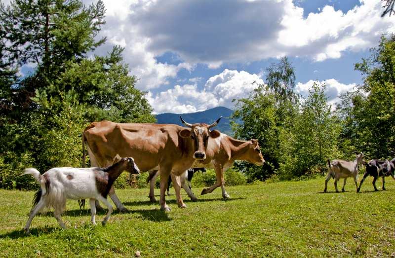 goats_milk_vs_cows_milk_formula_a_1556875756
